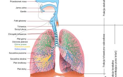 Wpływ zanieczyszczeń powietrza na zdrowie człowieka